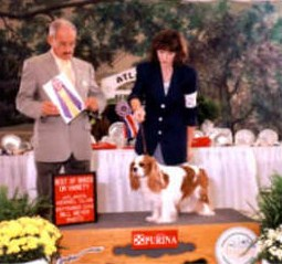 CH Moonvale Infatuation Cavalier King Charles Spaniel Group Win